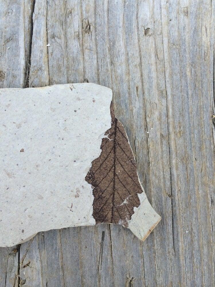 Florissant Fossil Quary: 18117 Teller County Road 1, Florissant, CO
