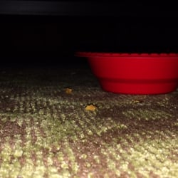 Photo of Super 8 Kingman - Kingman, AZ, United States. Empty bowl my