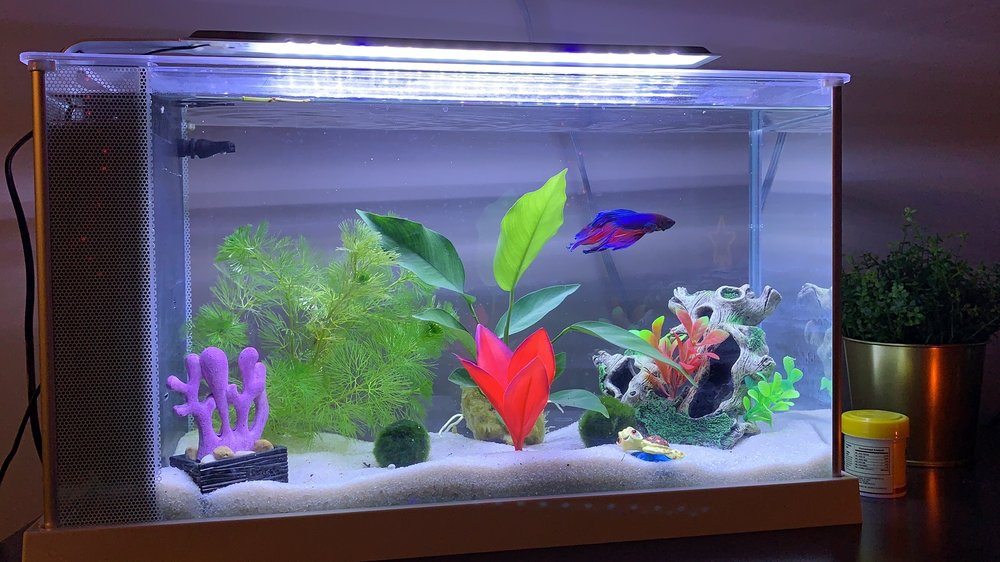 The Reef Aquarium Shop: 5613 N Keystone Ave, Indianapolis, IN