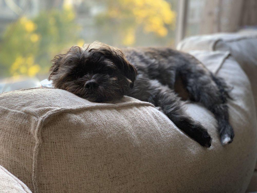 Underdog Animal Rescue: Lafayette, CA