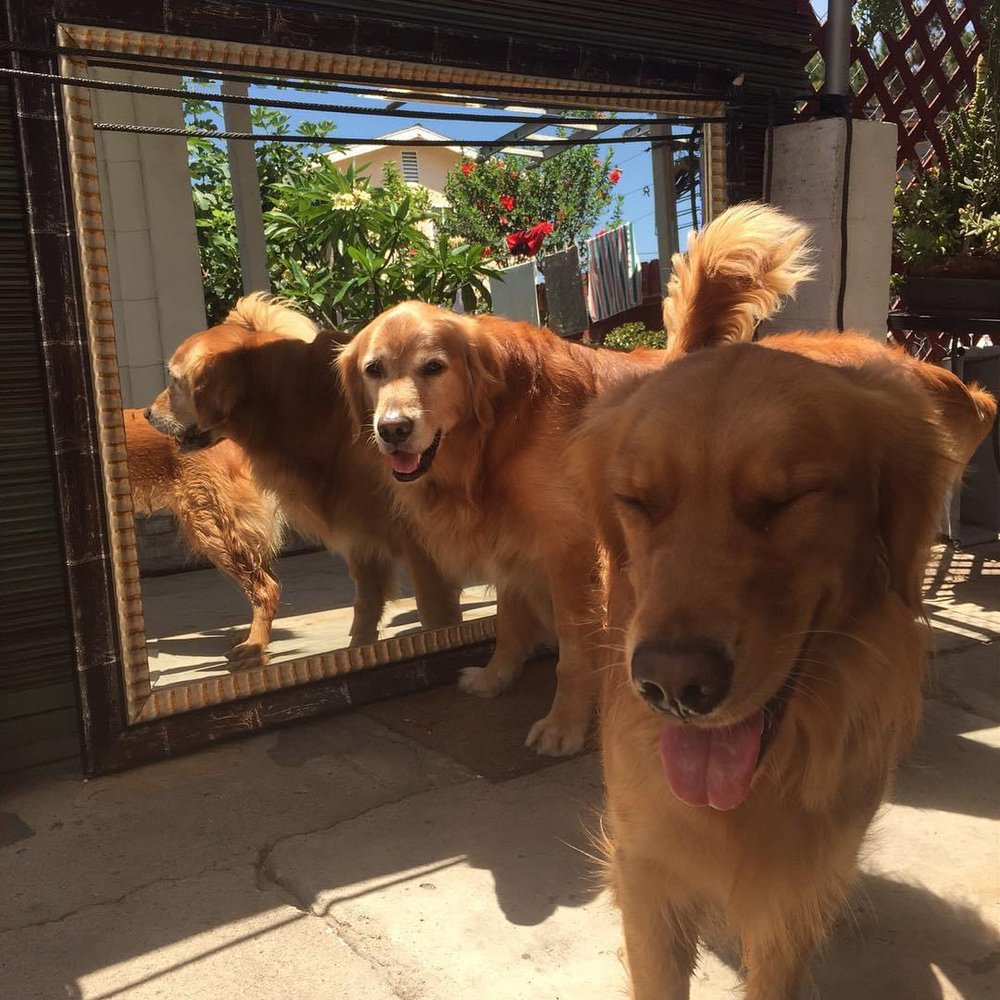 A Tired Dog Is A Happy Dog: Gig Harbor, WA