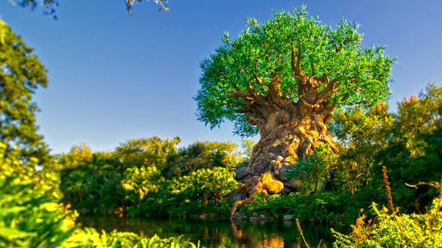 Disney's Animal Kingdom Theme Park: 2901 Osceola Pkwy, Orlando, FL