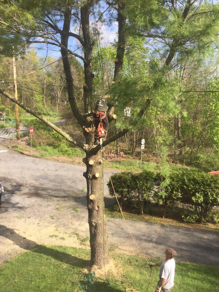 The Wood Shop Tree Service: Newburgh, NY