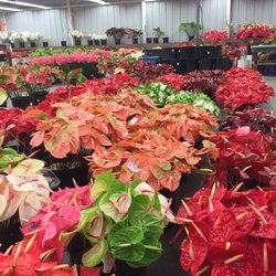 Photo Of Green Point Nurseries Hilo Hi United States