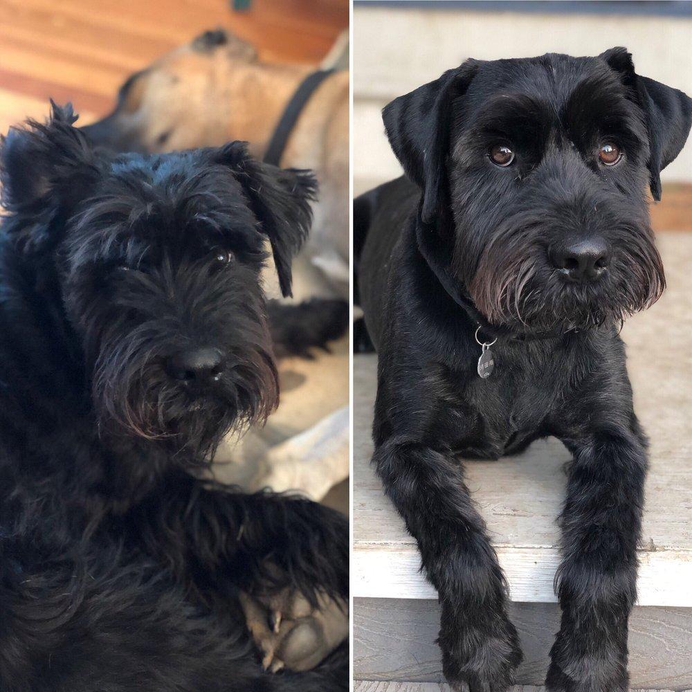 Lucky Dog Pet Salon