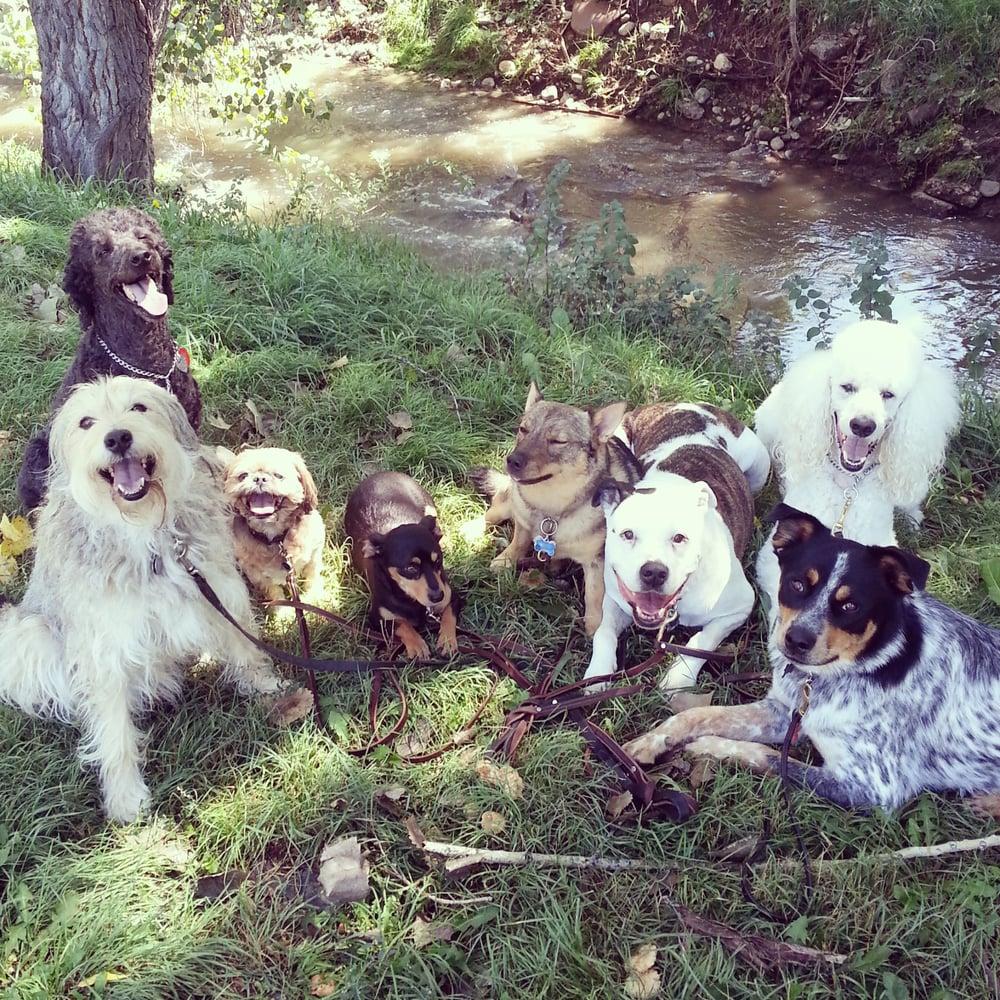 Dog Walking Service In Arvada Co