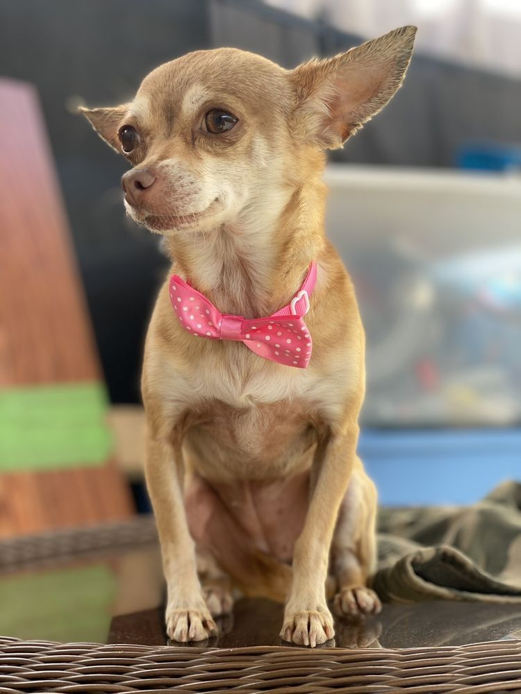 A&M Mobile Dog Grooming: Whittier, CA
