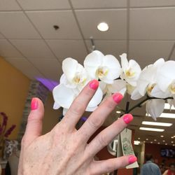 P O Of 5 Elements Skin And Nails Spa Methuen Ma United States