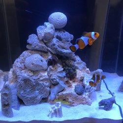 81b5b6e5392 KHC Aquarium - 57 Photos   23 Reviews - Aquarium Services - 150-01 ...