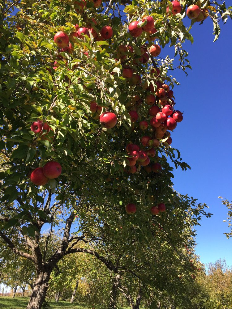 Applecrest Orchards: 7306 24th Ave N, Hugo, MN