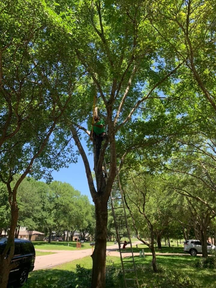 Arturo García Tree and Lawn Service: Marion, TX