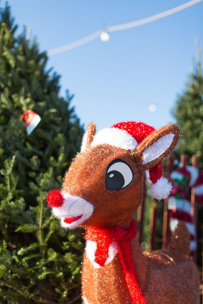 Our Farm Christmas Trees: 4271 210th Ave NW, Oak Grove, MN