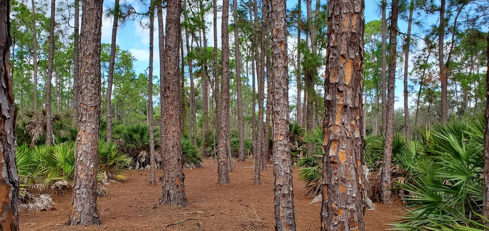 Moss Park: 12901 Moss Park Rd, Orlando, FL