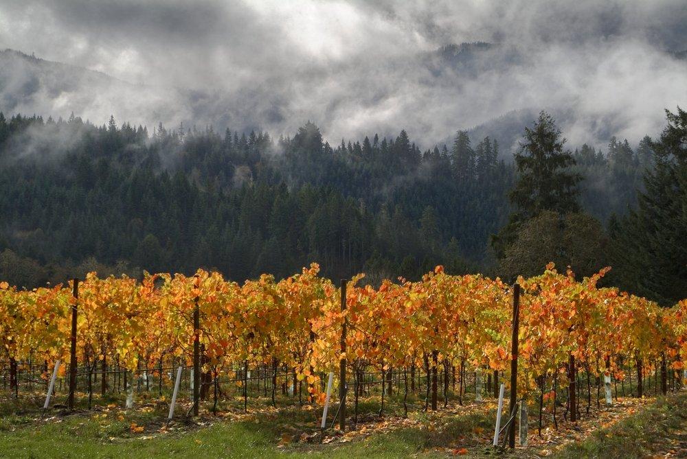 Brandborg Vineyard & Winery: 345 First St, Elkton, OR