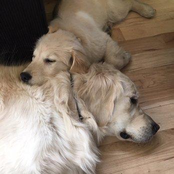 Dog Day Care Near Denver Co