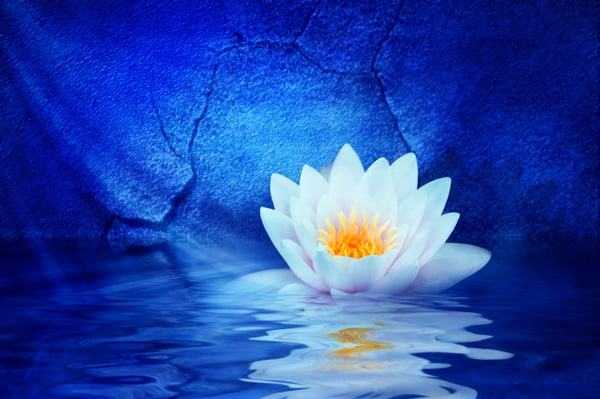 blue lotus connection  life coach  san mateo, ca  phone number, Natural flower