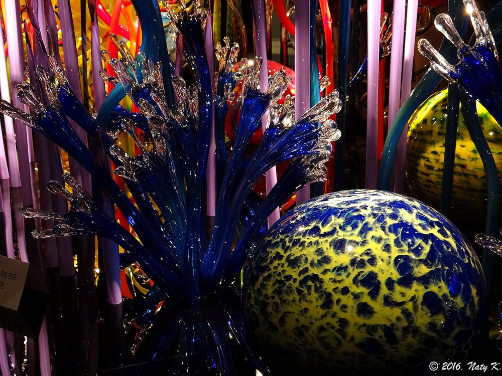 Chihuly Collection: 720 Central Ave, Saint Petersburg, FL