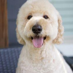My Puppy Parlor 23 Photos Pet Groomers 903 Gallatin