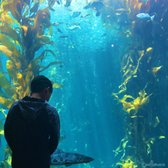 Monterey Bay Aquarium 7204 Photos 3037 Reviews