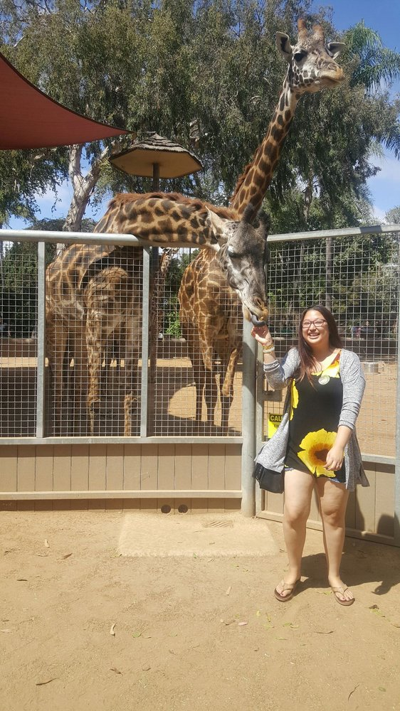Feeding Giraffes On The Animals In Action Experience Yelp