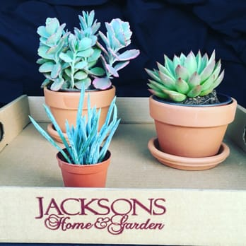 photo of jacksons home garden dallas tx united states succulents. beautiful ideas. Home Design Ideas
