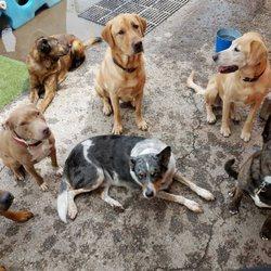 The Dirty Dog 36 Photos Pet Groomers 3120 S Kansas Ave Topeka