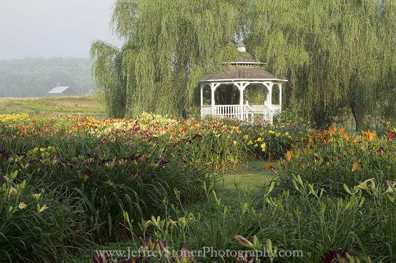 Oakes Daylilies: 8153 Monday Rd, Corryton, TN