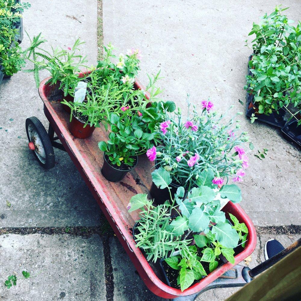 Verni's Garden Center & Landscaping: 2222 Hazen St, East Elmhurst, NY