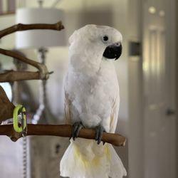 Birdmans Parrots - 85 Photos & 35 Reviews - Bird Shops