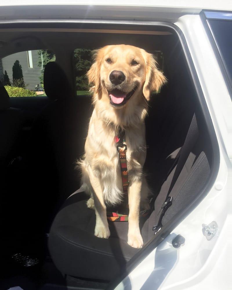 Kal Pals Pet Care: Apple Valley, MN