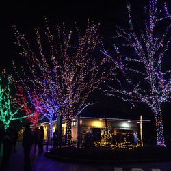 photo of zoolights washington dc united states colored trees - Dc Christmas Lights