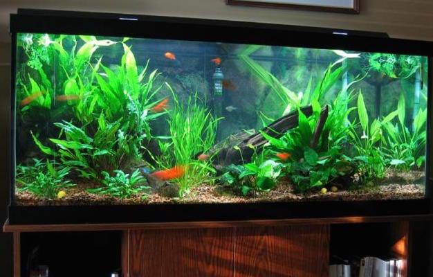 Bay area aquarium maintenance 49 photos aquarium for Fish tank cleaning service near me