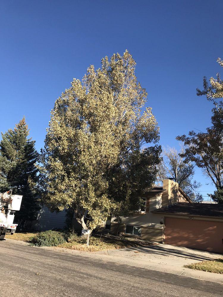 Capshaw Tree Service: Casper, WY