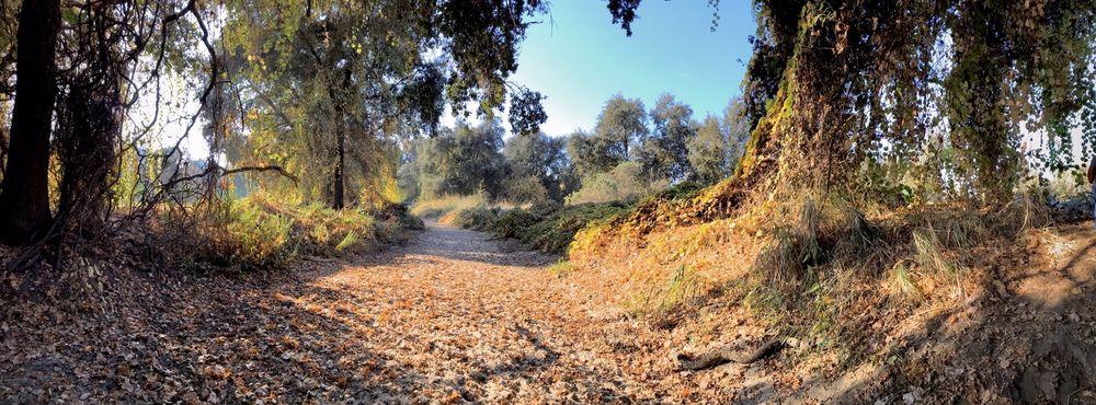 Kaweah Oaks Preserve: 29979 Road 182, Exeter, CA