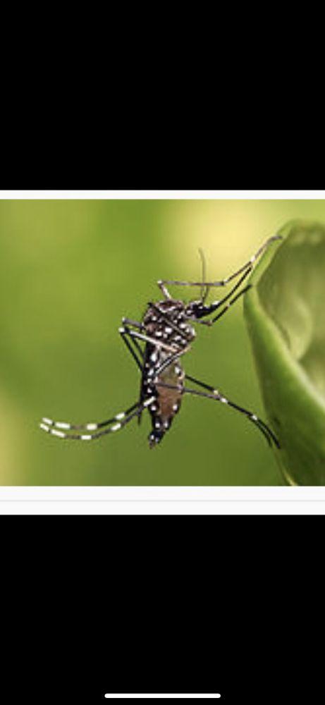 Handytech Termite & Pest Control  Services: West Hills, CA