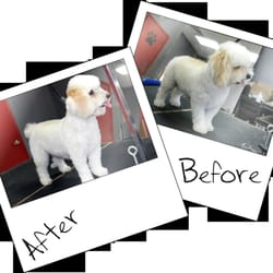 Pet heroes dog grooming 13 photos 15 reviews pet groomers photo of pet heroes dog grooming el paso tx united states solutioingenieria Gallery