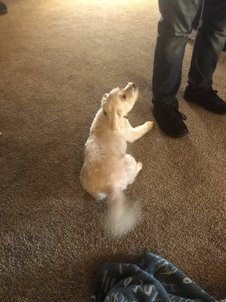 Grooming Tails: 4309 S 6th St, Klamath Falls, OR