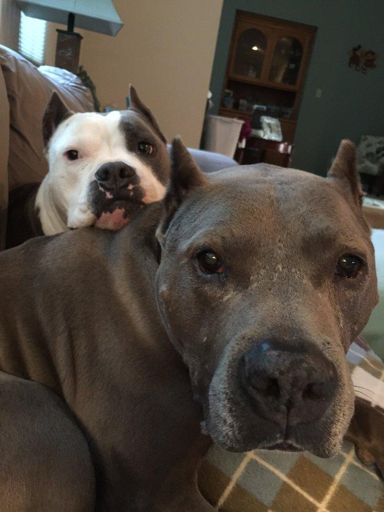 Blue Ribbon Pets: 5290 N State St, Ukiah, CA