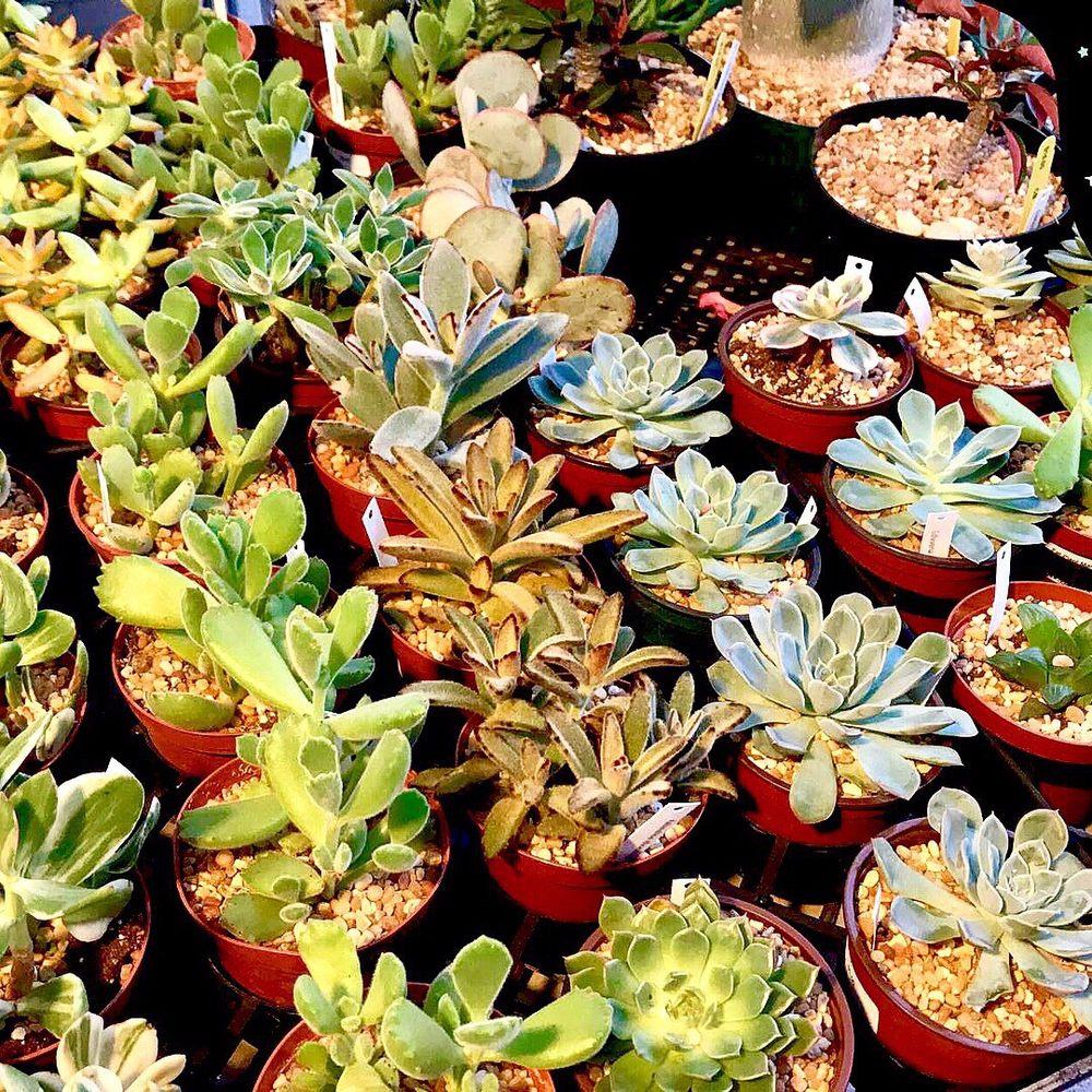 Fullerton Market: 121 E Wilshire Ave, Fullerton, CA