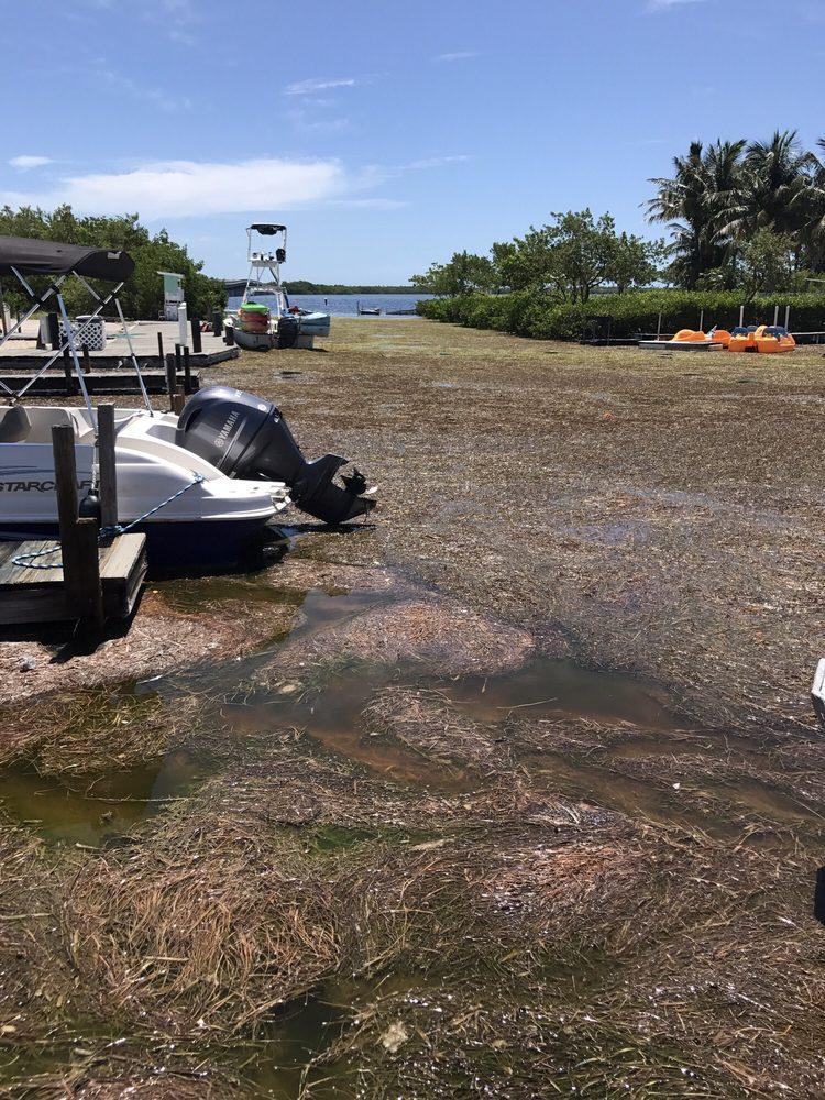 Big Pine Kayak Adventures: 1791 Bogie Dr, Big Pine Key, FL
