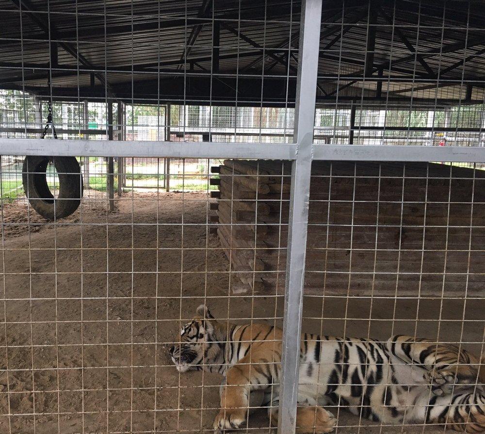The Greater Wynnewood Exotic Animal Park: 25803 N County Road 3250, Wynnewood, OK