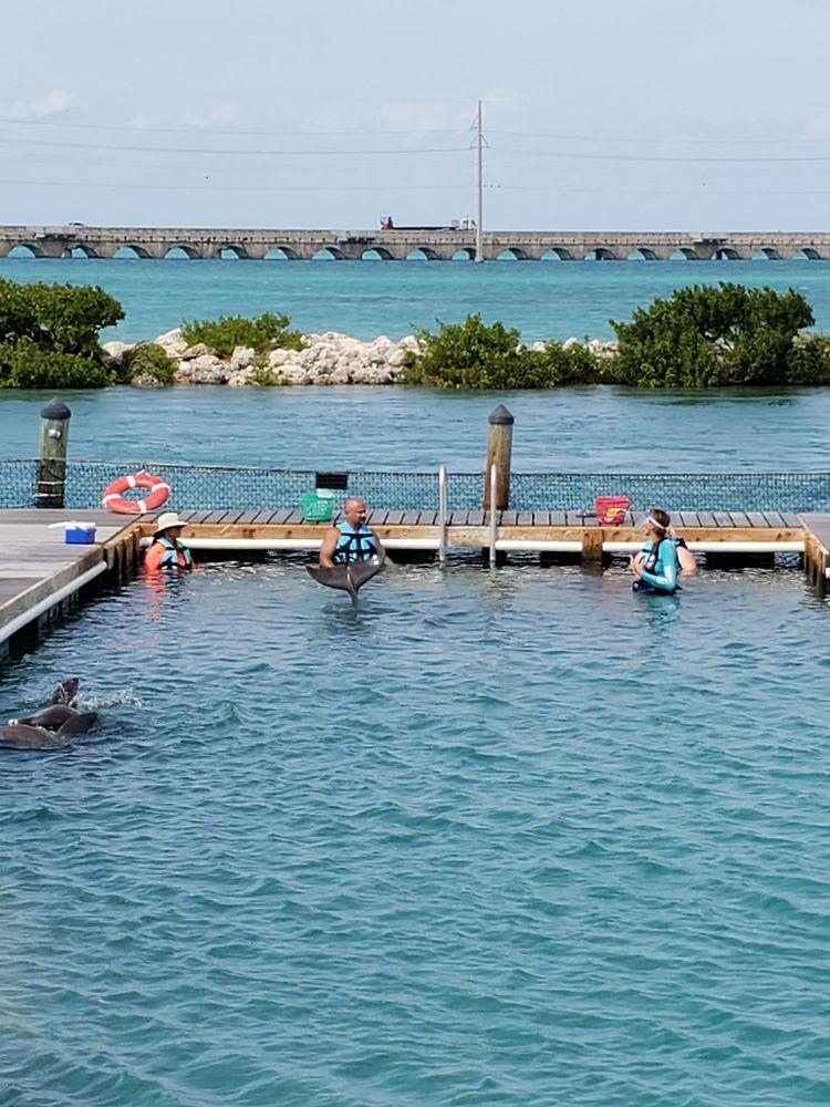 Dolphin Connection: 61 Hawks Cay Blvd, Marathon, FL