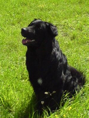 Jeulin educateur canin - Dressage de chien & autres