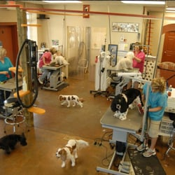 Dtails pet grooming 66 photos pet sitting 1275 marks church photo of dtails pet grooming augusta ga united states solutioingenieria Image collections