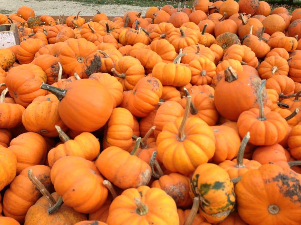 Tweite's Pumpkin Patch: 1821 Frontier Rd SW, Byron, MN