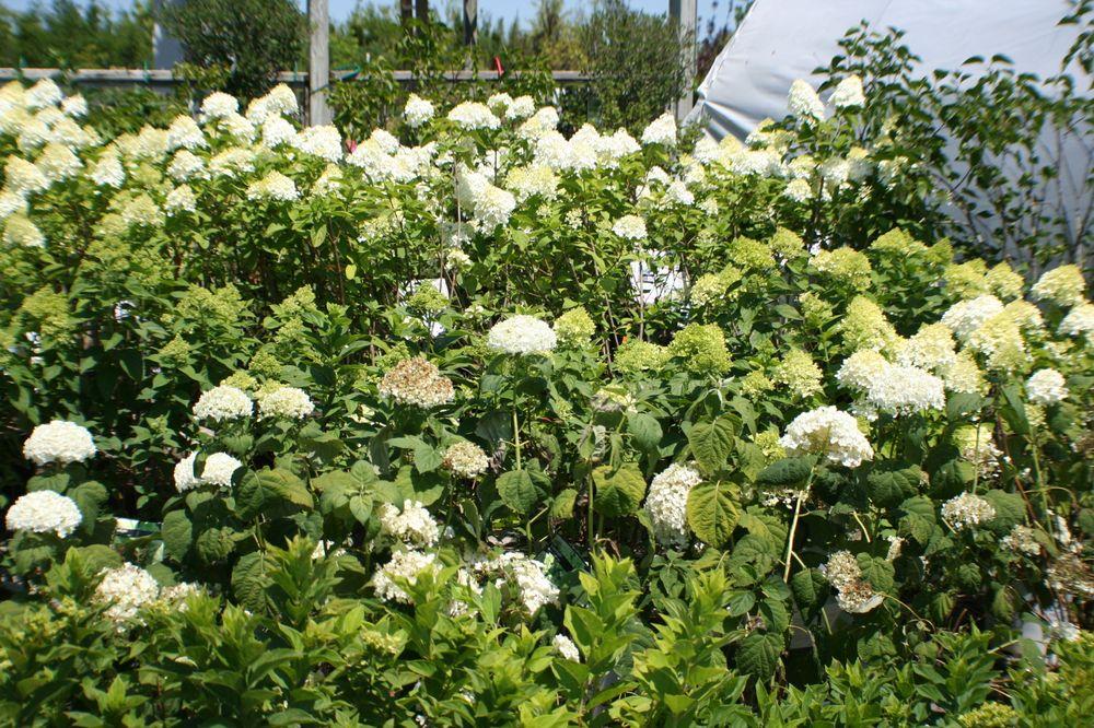 Maidstone Tree Farm & Garden Centre: 7010 Hwy 3, Maidstone, ON