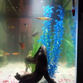 Aquarium world 70 photos 31 reviews pet shops for Fish store houston