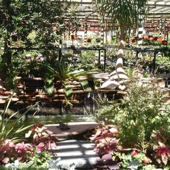 Star Nursery 84 Photos 76 Reviews Nurseries Gardening Eastern Thenur