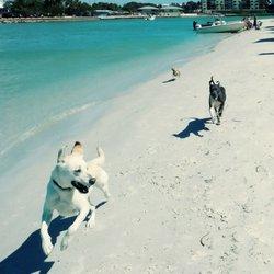 dog beach st petersburg fl