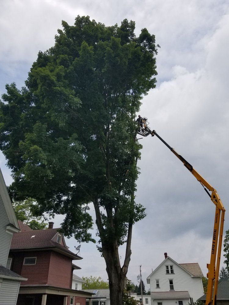 New View Tree Service: Titusville, PA